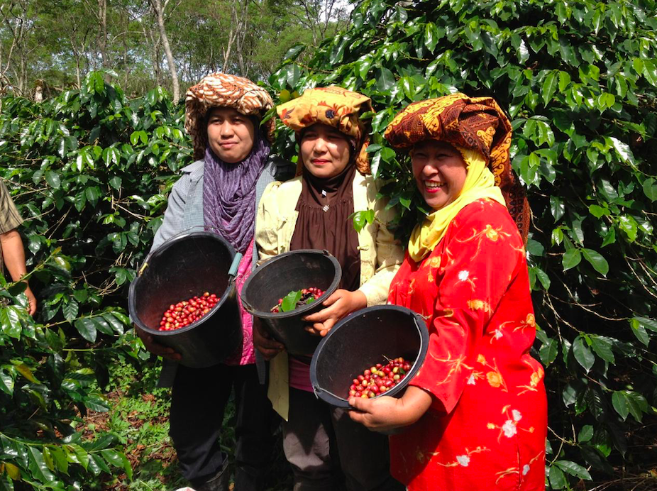 Three Indonesian women holding barrels of coffee.